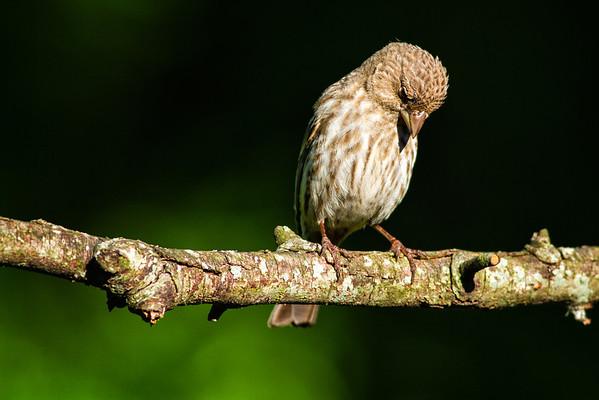 Bird's Prayer