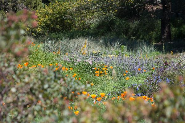 2013-03-10 Botanic Gardens