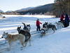 Kids petting sled dogs