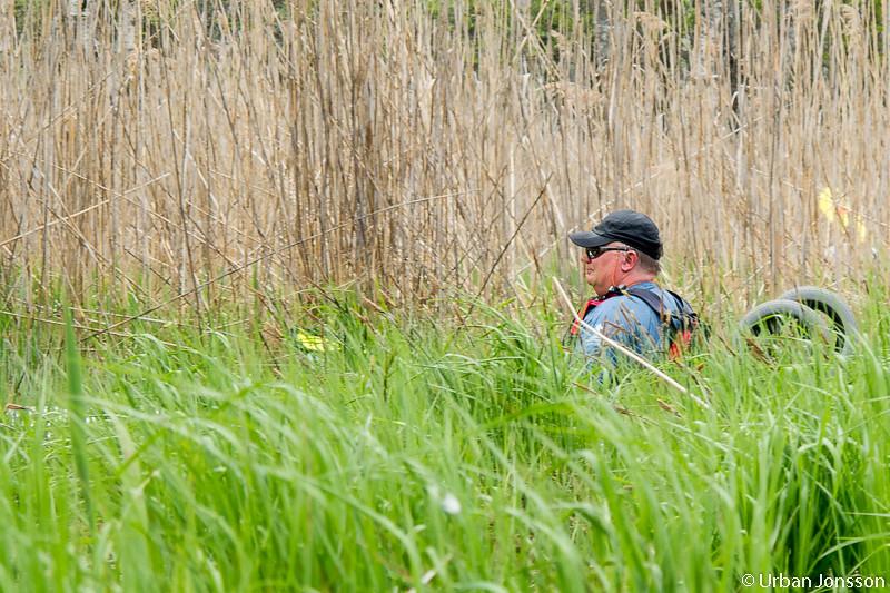 Plötsligt dök det upp paddlare bland grästuvorna vid sidan om ån.... Den hade vänt!