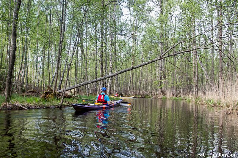 En stunds paddling i smala vatten
