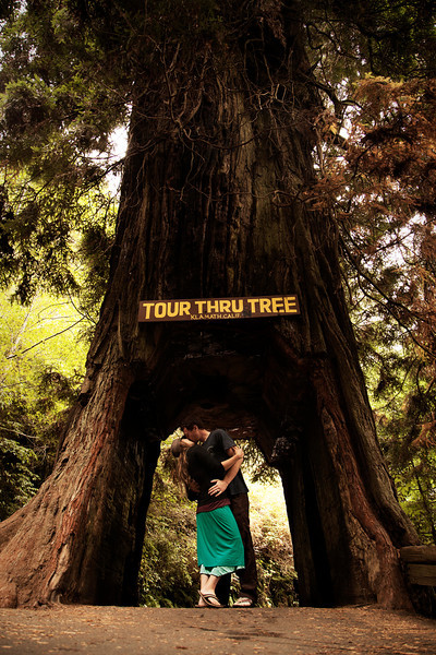 A tourist attraction from a bygone era, the drive-through trees are almost all a thing of the past.