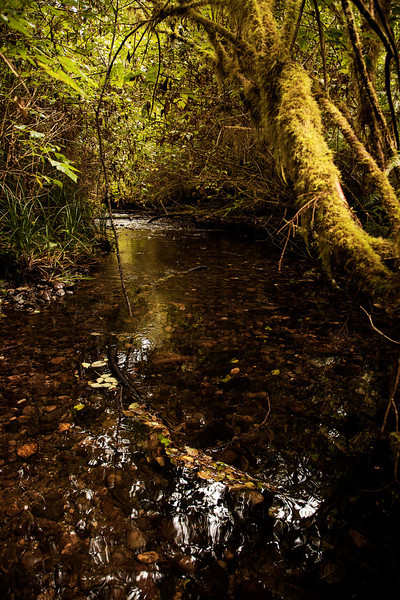 In an area rich with moisture, small streams carry the excess water away, providing yet another beautiful element for the eyes to soak in.