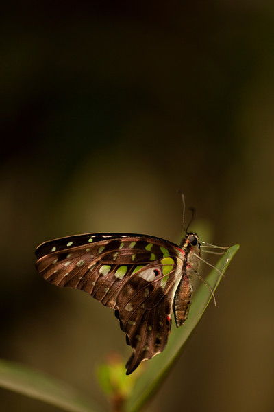 We spent a bit of time relaxing and trying to capture the sights at a local Cambodian butterfly center.