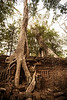 The ruins of Ta Prohm have been slowly degraded by time and weather until what remains is an amazing mixture of ancient stone architecture, tumbled decay and ruin, and enormous jungle trees with their roots firmly grasping the remains of the temples of a former day.