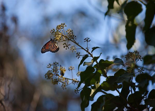 2013-10-16 Coronado Butterfly Garden