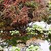 Botanic Garden Cracow autumn 2013