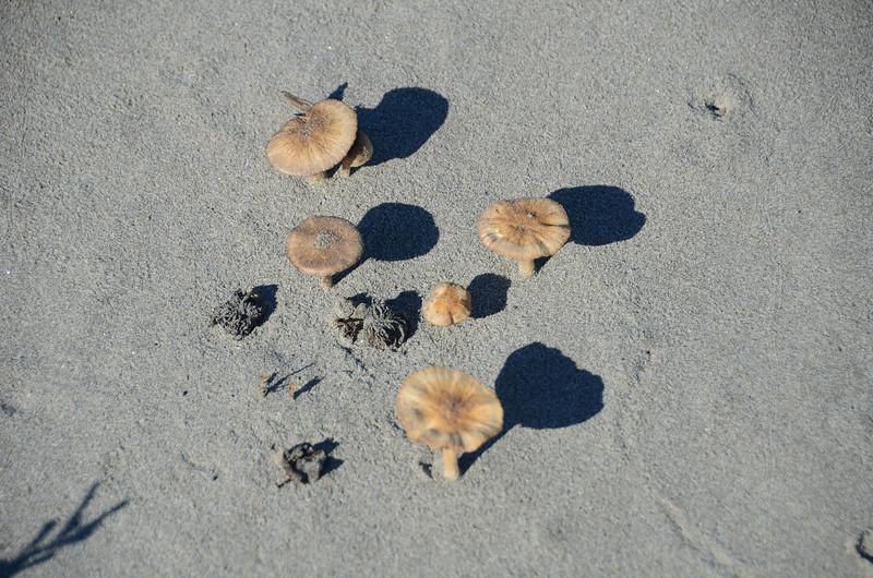 Mushrooms on the sand