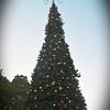 St  Armands Tree Lighting 06
