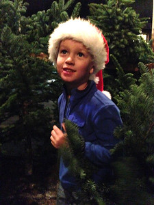 Picking out our Christmas tree