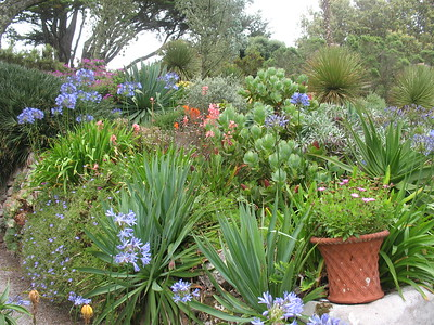 Gardens at Tresco - Mimi Nenno