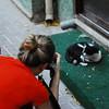 Capturing the Cat<br /> <br /> CJ Leede (NYU Gallatin) photogs a stray cat in the Dubai souk.