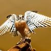 201310-Birds-0055