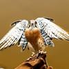 201310-Birds-0056
