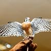 201310-Birds-0057
