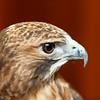 201310-Birds-0059