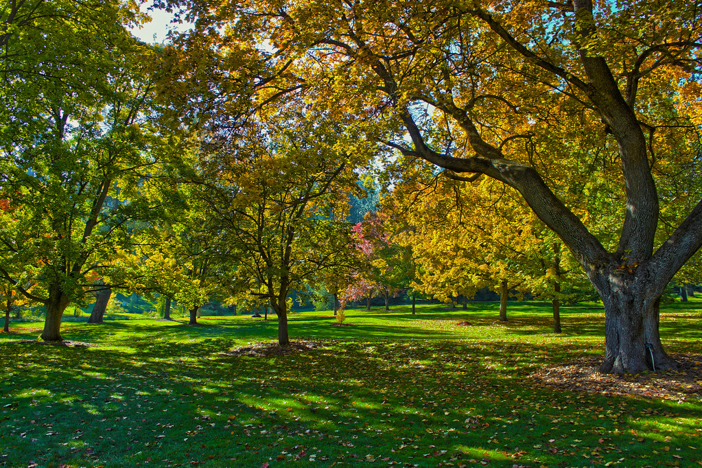 Finch Arboretum