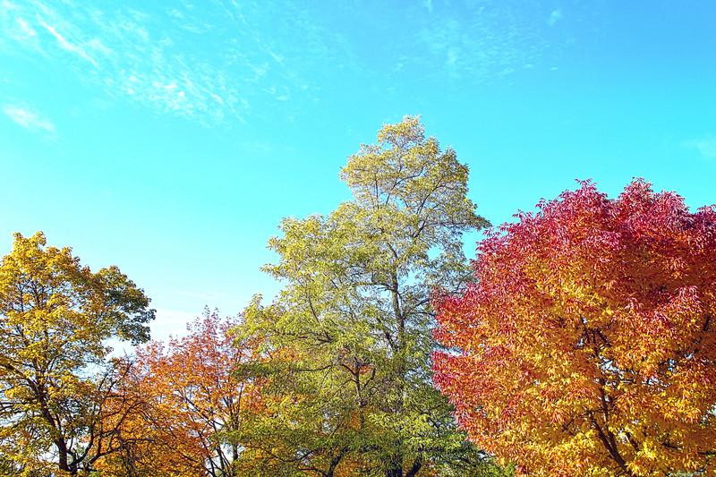 Fall Day at Minnehaha...