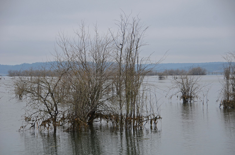 Nisqually - there's a Kingfisher there!