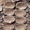 VL 020813 SHELLS ACCOUNT