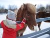 Linda Mjöll og hestarnir