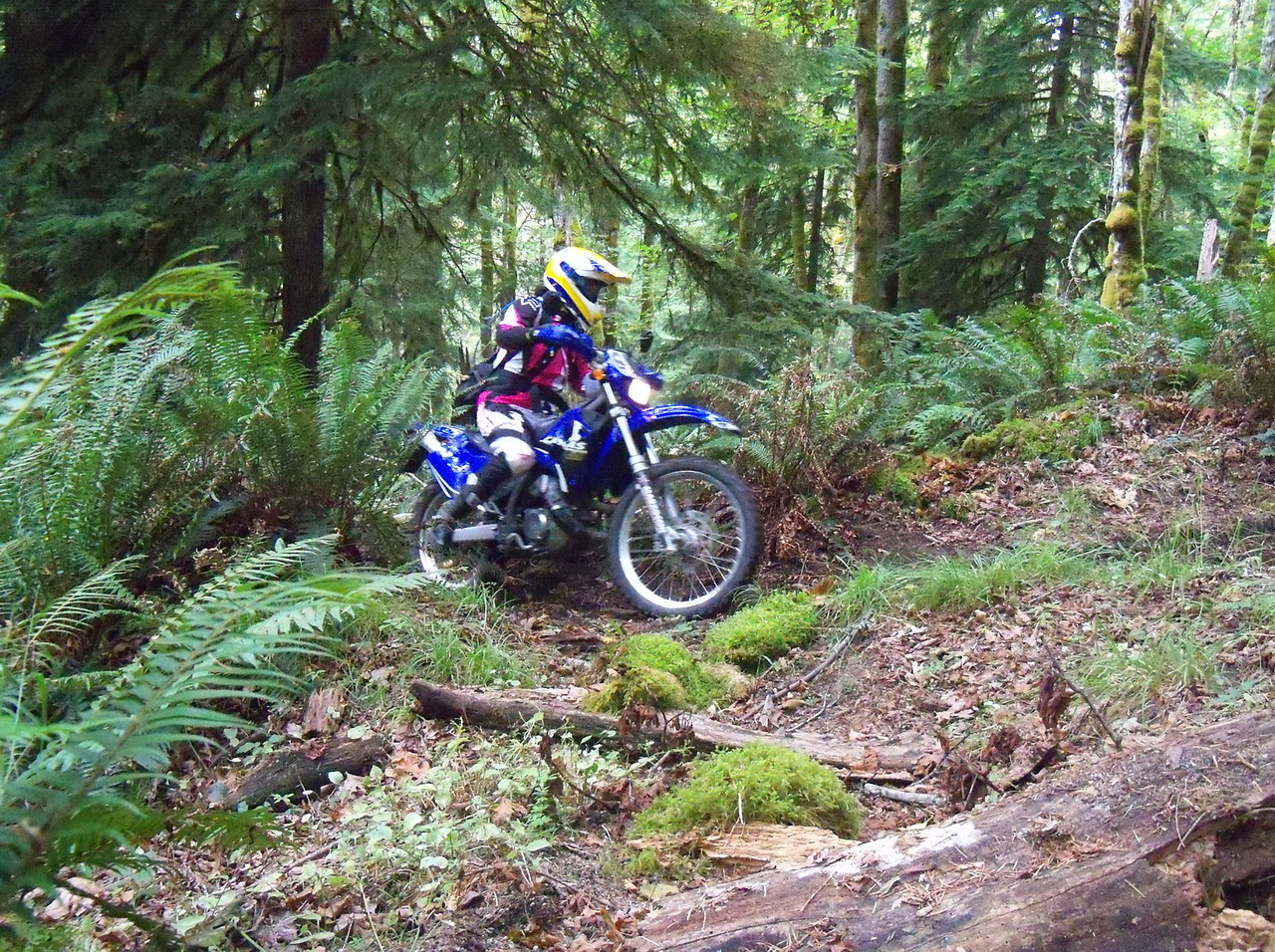 Krause Ridge is Joe's favorite trail