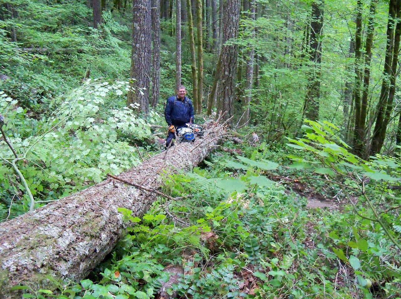 This is from the second ride Thursday running North on the lower 270 Trail.. We found this newly fallen log across the trail..