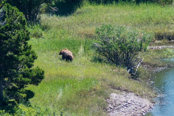 On our way to Swiftcurrent Lake, to check it out for a future shoot, we ran into our first Grizzly Bear. Turns out pretty much every time we came to this area we saw a couple bears