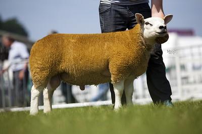 p Recorded Tup Lamb