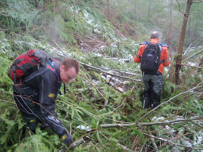 So, we go many, many miles on this trail & find the last 1/4 mile is wiped out by the DNR's Pre Commercial Thinning Crew...