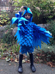 Connor heading out for his coop pumpkin carving night class. First time in his costume.
