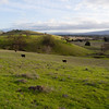Harvey Bear Ranch
