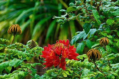Hawaii - 2013