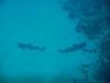 20130714-Film 0413-023