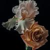 Iris and Rose (Sunset Celebration)