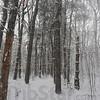 MET010113snow trees