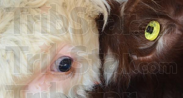 MET012613 4-Htags eye