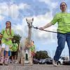 MET0711134-Hparade alpaca