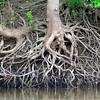 MET062513wabash roots