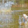MET061b13 wabash carp