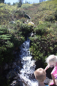 These streams and waterfalls just run over the vegetation, carving a new path