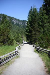 Loop trail at Longmire