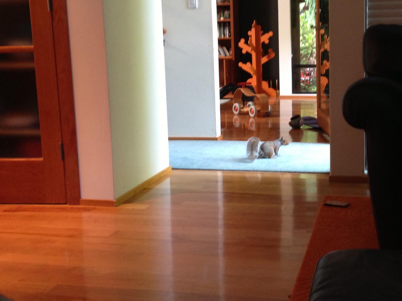 Intruder!