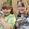 Rabbit wranglers