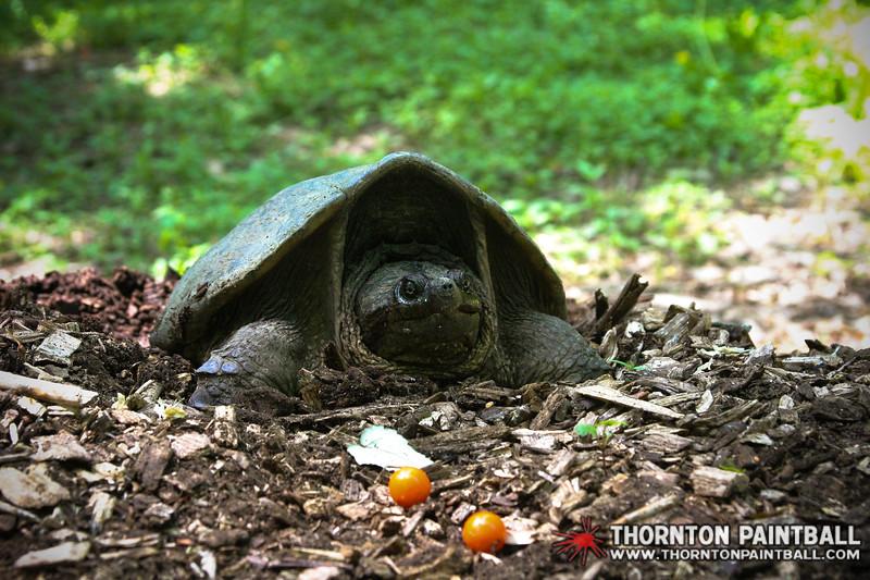 20130602-IMG_7684-www.thorntonpaintball.com.jpg