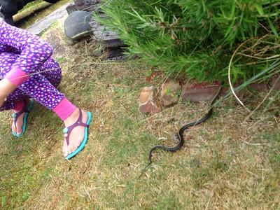 Resident beach snake