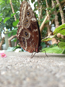 Butterfly house at the Science Center. Did you know if you turn your iPhone upside down so the lens is near the ground, to take a picture like this you actually get a little depth of field?