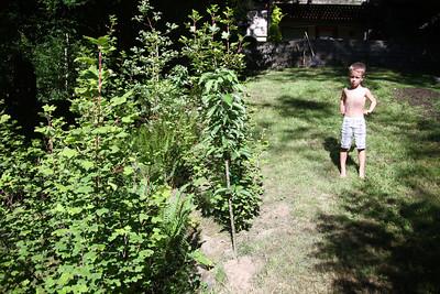 Ravine plants growing taller