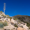 Yucca plant and summit