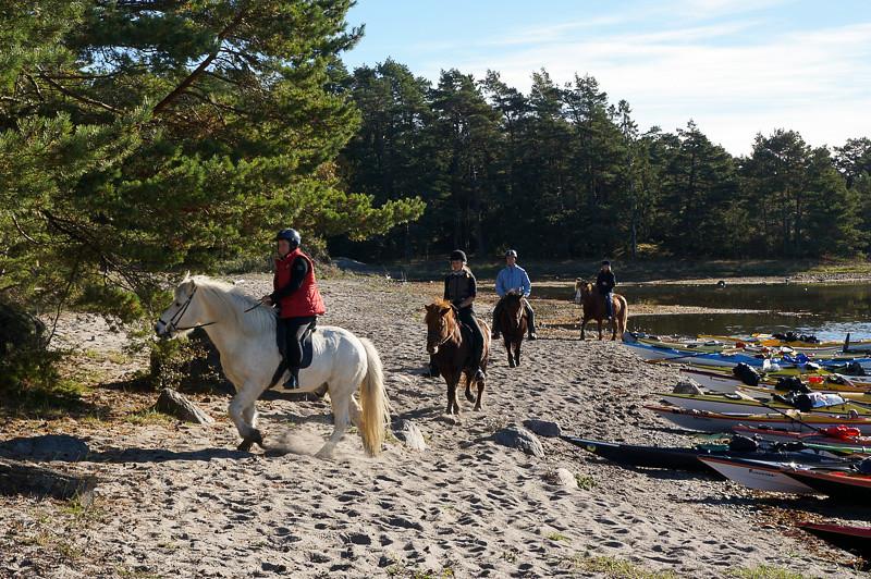 Hästar på Ringsön